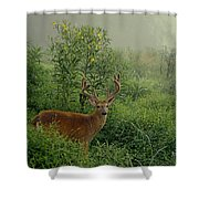 Misty Morning Deer Shower Curtain