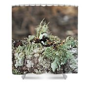 Misty Moss Shower Curtain