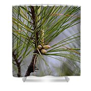 Misty Pines In Spring 2013 Shower Curtain