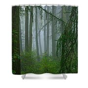 Misty Woodland Shower Curtain