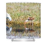 Mixed Group Of Shore Birds Shower Curtain