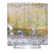 Mixed Shore Birds Shower Curtain