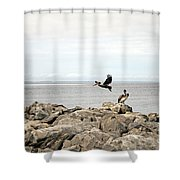 Mobile Bay 8 Shower Curtain