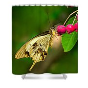 Mocker Swallowtail Butterfly And Berries Shower Curtain