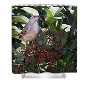 Mocking Bird And Berries Shower Curtain