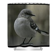 Mocking Bird Cuteness - Featured In Wildlife Group Shower Curtain