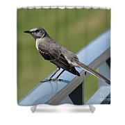 Mockingbird Perched Shower Curtain