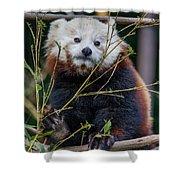 Mohu The Teenage Red Panda Shower Curtain