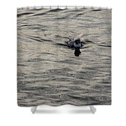 Moire Silk Water And A Long Tailed Duck Shower Curtain