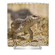 Mojave Desert Iguana Shower Curtain