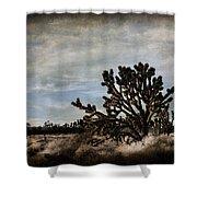 Mojave Desert Joshua Tree In Cima Shower Curtain
