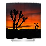 Mojave Morning Shower Curtain