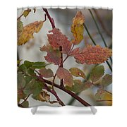 Molting Leaves  Shower Curtain