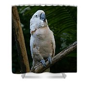 Moluccan Cockatoo Shower Curtain