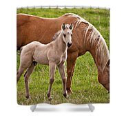Mom And Foal Shower Curtain
