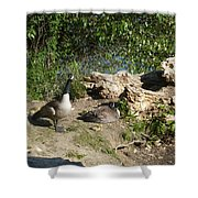 Mom Dad And Goslings Shower Curtain