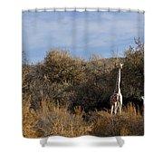 Momma And Baby Giraffe Shower Curtain