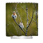 Momma Bluebird And Baby Shower Curtain