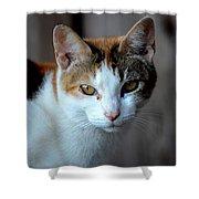 Momma Cat Shower Curtain