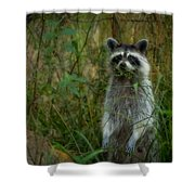 Momma Coon Shower Curtain
