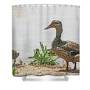 Momma Duck And Baby With A Different View Shower Curtain