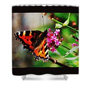 A Monarch In Ireland # 2 Shower Curtain