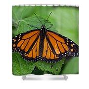Monarch 3 Shower Curtain