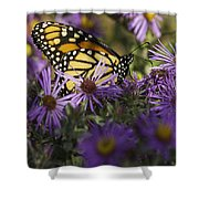 Monarch And Asters Shower Curtain