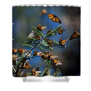 Monarch Butterflies Shower Curtain