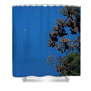 Monarch Butterflies Flying Shower Curtain