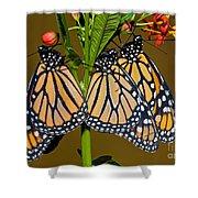 Monarch Butterflies Shower Curtain