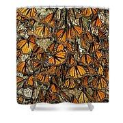 Monarch Butterflies Wintering Shower Curtain