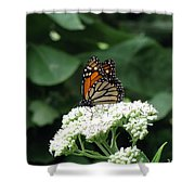 Monarch Butterfly 45 Shower Curtain