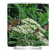 Monarch Butterfly 47 Shower Curtain