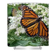 Monarch Butterfly 52 Shower Curtain