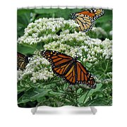 Monarch Butterfly 54 Shower Curtain