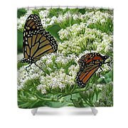 Monarch Butterfly 56 Shower Curtain