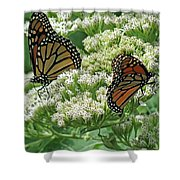 Monarch Butterfly 57 Shower Curtain