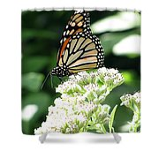 Monarch Butterfly 58 Shower Curtain