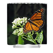 Monarch Butterfly 59 Shower Curtain