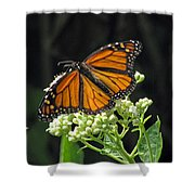 Monarch Butterfly 60 Shower Curtain
