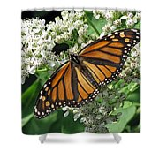 Monarch Butterfly 62 Shower Curtain