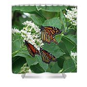 Monarch Butterfly 63 Shower Curtain