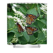 Monarch Butterfly 64 Shower Curtain