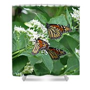 Monarch Butterfly 65 Shower Curtain
