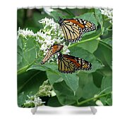 Monarch Butterfly 66 Shower Curtain