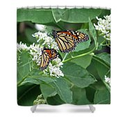 Monarch Butterfly 67 Shower Curtain