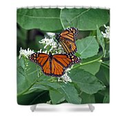 Monarch Butterfly 68 Shower Curtain
