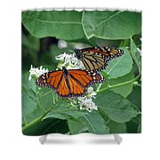 Monarch Butterfly 69 Shower Curtain