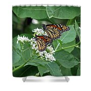 Monarch Butterfly 70 Shower Curtain